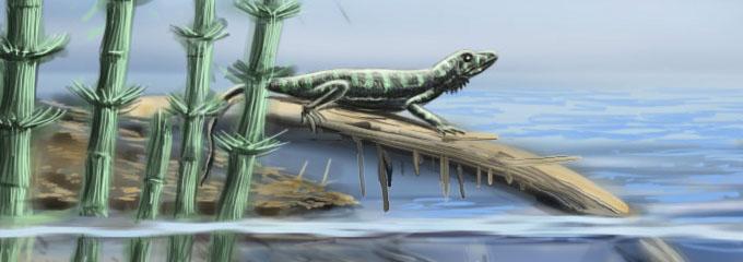 What Is Svt >> aphelosaurus