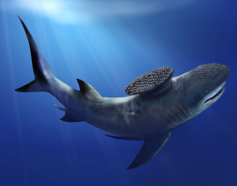 an introduction to the magnificent world of sharks Shark populations around the world are in rapid decline sharks grow relatively slowly, take many years to mature and produce relatively few young.